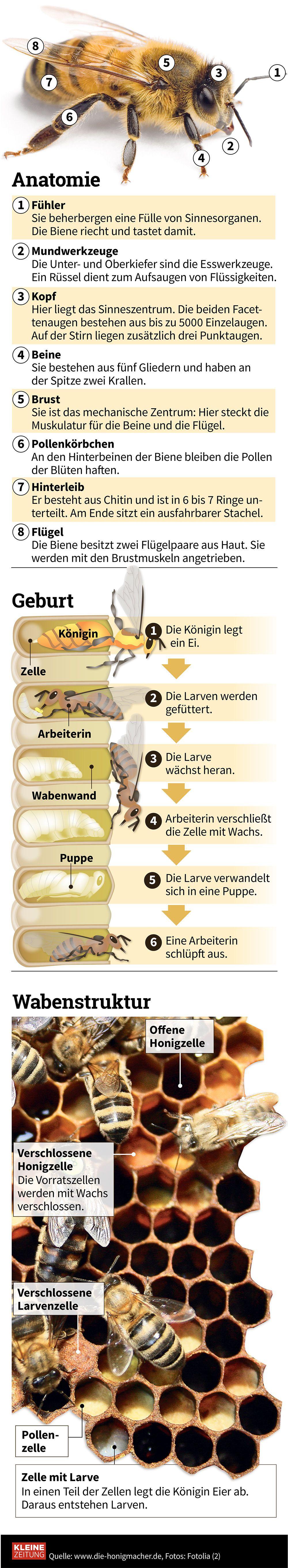 Grafik des Tages: Honigbienen in Gefahr « kleinezeitung.at