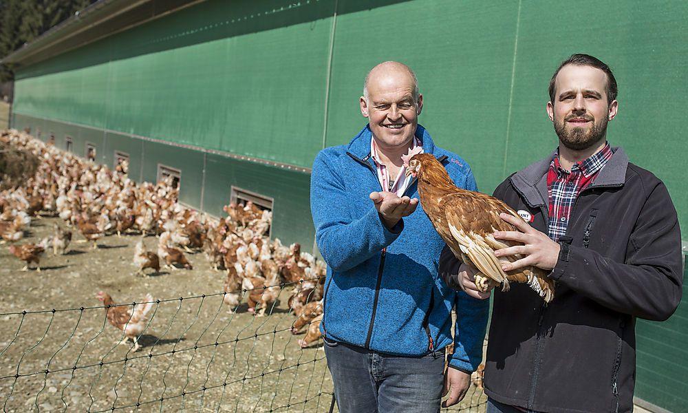 Hühner dürfen ab sofort wieder ins Freie
