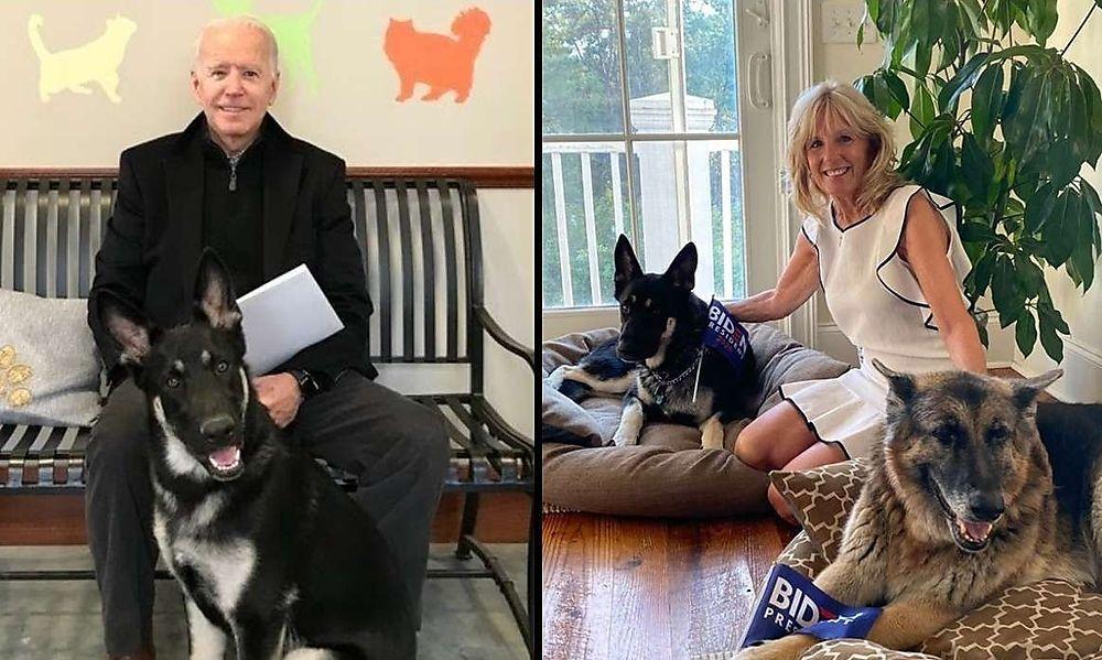 Es kommen wieder First Dogs ins Weiße Haus