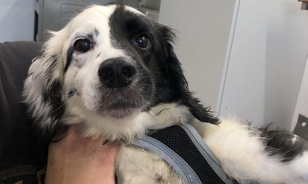 Frau lebte mit 14 Hunde auf engstem Raum