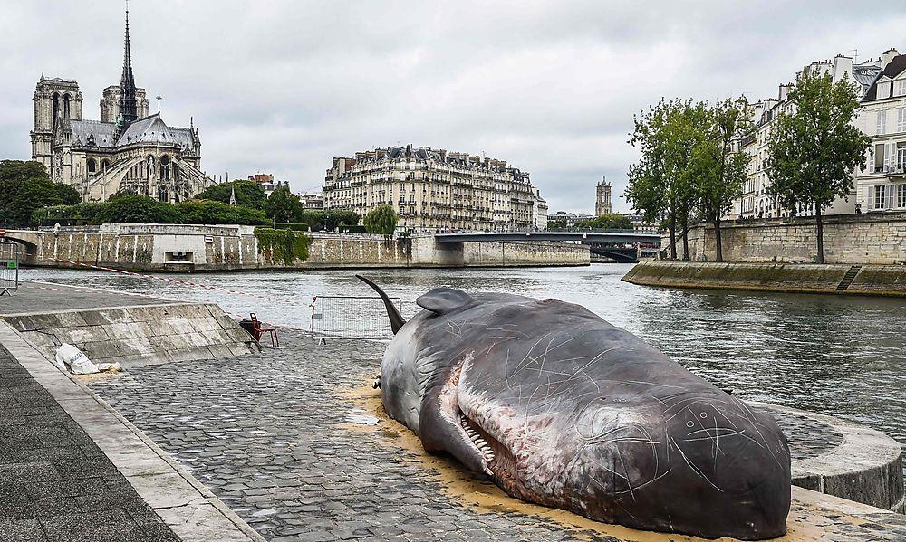 Mit Fischgestank: Pottwal strandet im Herzen von Paris