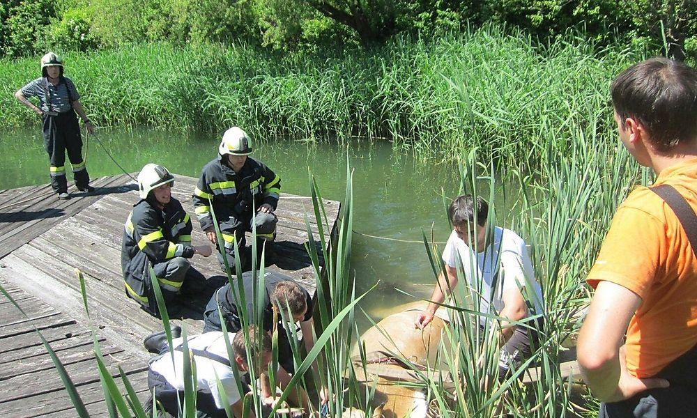 Von Lärm erschreckt: Pferd lief gegen Traktor und stürzte in Teich