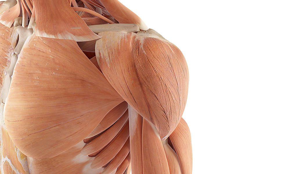 Ratgeber: Die vier häufigsten Probleme mit der Schulter: operieren ...