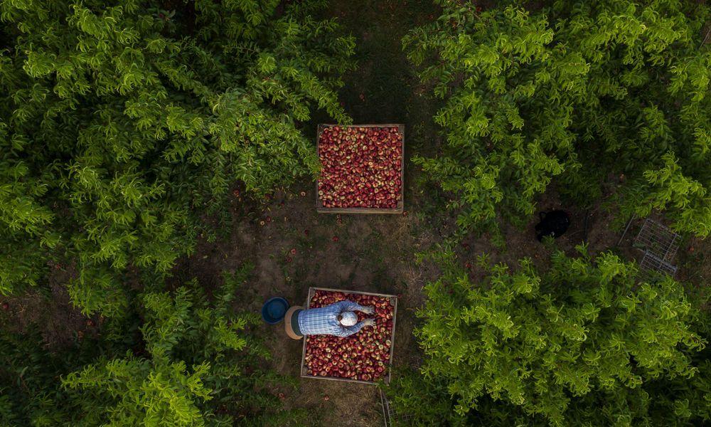 Europas Obstgarten unter Quarantäne