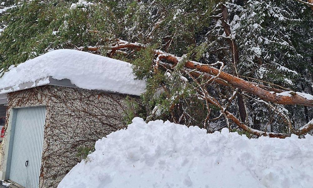 Kameraden der FF Drobollach entfernten einen umgestürzten Baum