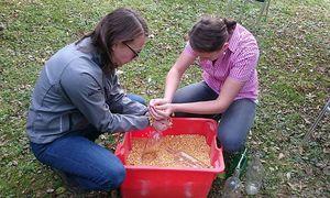 Simone und Julia Köberl füllen eifrig Maiskörner in eine Flasche. / Bild: Sarah Helmanseder