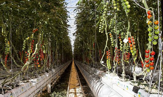 Die Frutura produziert in Bad Blumau ganzjährig Gemüse