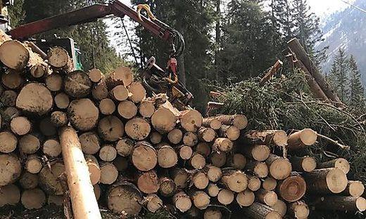 100.000 Festmeter Schadholz fielen in Großkirchheim an