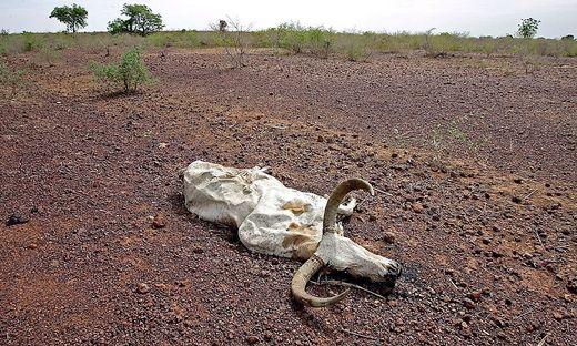 Klimawandel ist in der Sahelzone deutlich spuerbar