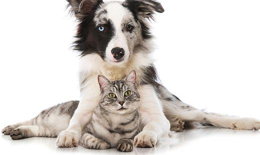 Tiere als Therapeuten