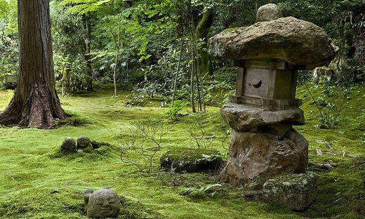 Moos ist meist dort zu finden, wo der Boden nährstoffarm, feucht und schattig ist.