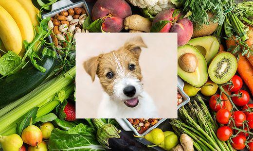 Früchte für den Hund