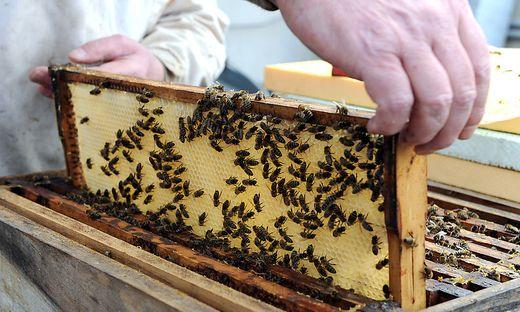 Um saisonale Veränderungen wissenschaftlich untersuchen zu können, fordern Kärntner Imker ein Bienenforschungsinstitut