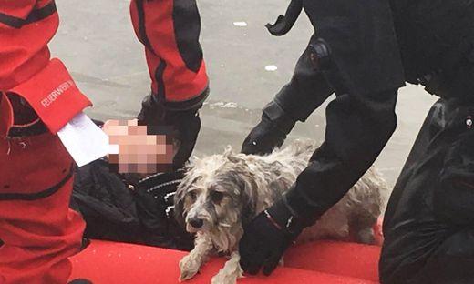 Zwischenfall in Wien-Donaustadt: Frau und Hund aus eingebrochenem Eis gerettet