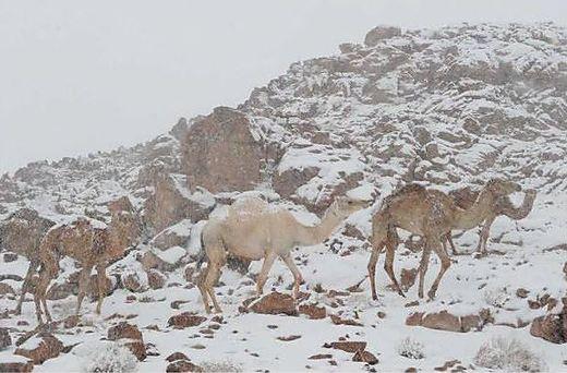 Schnee in Saudi-Arabien