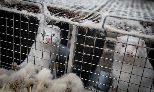 Verboten wird die Zucht und Tötung von Tieren mit dem alleinigen Ziel, Pelze zu gewinnen