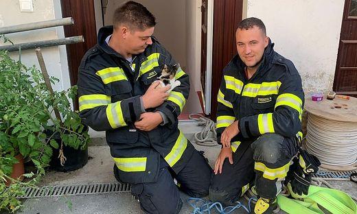 Die Florianis der FF Wildon retteten zuerst eine Babykatze und mussten gleich zum nächsten Einsatz eilen: ein Verkehrsunfall auf Höhe Unterer Markt