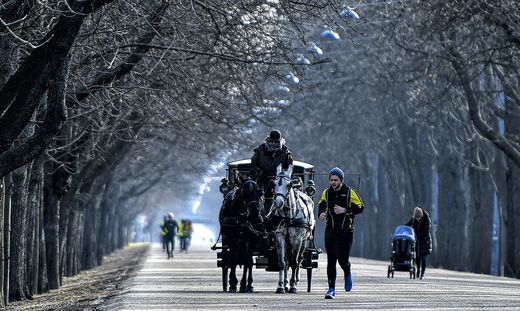 Pferdegespann auf der Praterhauptallee im Februar 2019 in Wien