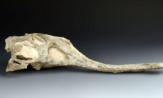 Neue Saurier-Art im Naturhistorischen Museum entdeckt