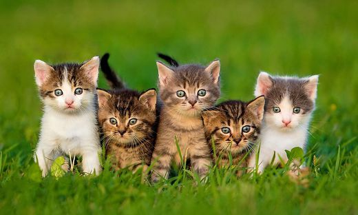 Sujet: Die kleinen Kätzchen benötigen dringend Nahrung.
