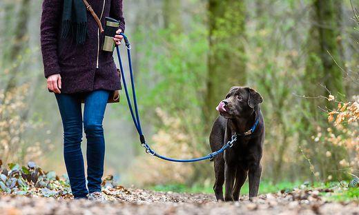 Ein Streit um die Anleinpflicht für Hunde hat jetzt ein Nachspiel