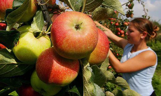 Das Corona-Virus hat den Kärntner Obstbauern nicht geschadet