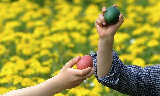 Nicht nur beim Eierpecken geht's dem Kärntner Osterei an den Kragen. Die Kärntner essen jährlich 134 Millionen Eier. Trotzdem haben es die heimischen Eierbauern schwer (Symbolfoto)