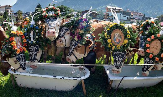 Ein Almabtrieb, wie hier in Tirol, hat im Gailtal weitreichende Folgen