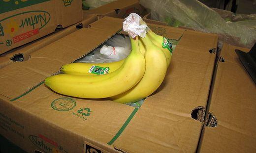 Die Firma Frutura lässt Bananen reifen, das bedeutet auch reiche Ernte für die Finanzen der Gemeinde Hartl