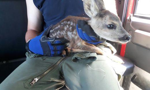 Tierischer Einsatz: Junges Reh von Nova Rock-Gelände gerettet