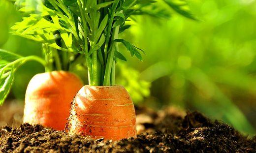 78 Prozent der Bio-Produkte werden in Österreich über die Supermärkte abgesetzt, der Rest über Direktvermarktung