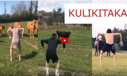 Kühe ärgern und sich dabei filmen lassen – Menschen kommen für ein paar Klicks auf die verrücktesten Ideen