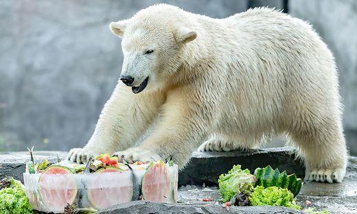 """""""Finja"""" freut sich über ihre mit Lachs, Melonen und Karotten gefüllte Eistorte"""