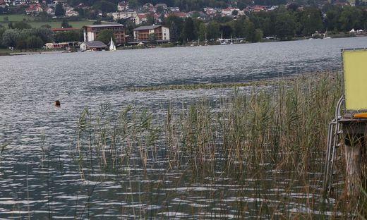 Im Ossiacher See wurden Bakterien nachgewiesen