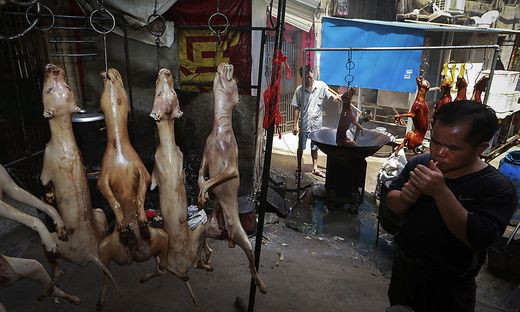 Die Regierung arbeitet derzeit neue Gesetze aus, um den Handel mit Wildtieren zu verbieten und Haustiere zu schützen