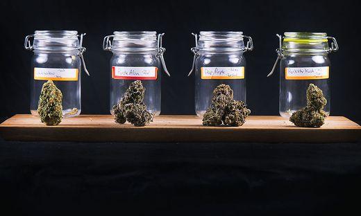 Cannabisblüten