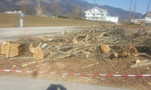 Reste der Bäume im Ortszentrum voon Ossiach