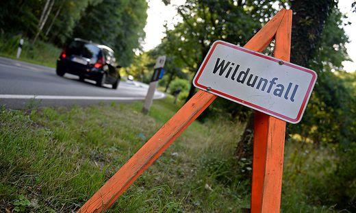 Die Kärntner Jägerschaft darf derzeit aus Datenschutzgründen der Polizei nach einem Wildunfall nicht den Kontakt zum zuständigen Jäger weitergeben (Symbolfoto)