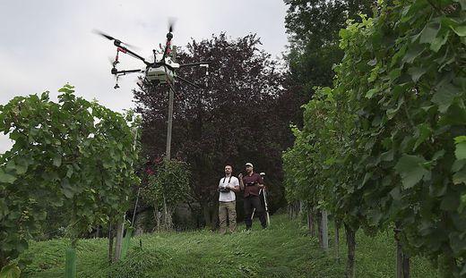 Clemens und Constantin Naschitz wollen Weinberge per Drohne spritzen, zur Demonstration noch mit Wasser