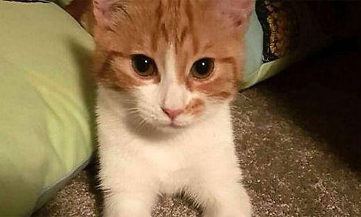 """Neuseeland Twitter: Neuseeland: First Cat """"Paddles"""" Wird Der Neue Twitter-Star"""
