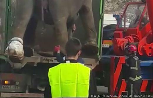 Elefantentransporter in Spanien kippt um - Tiere blockieren Straße