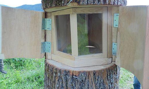 Mitte Juni soll Bienenvolk einziehen
