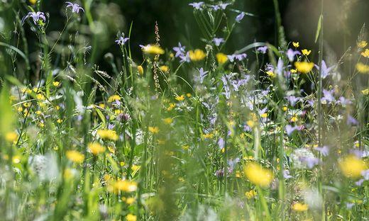 Blumenwiesen werden forciert