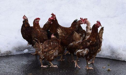 Einige der Hühner konnten noch rechtzeitig gerettet werden