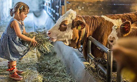 Bei jedem zweiten steirischen Bauernhof ist die Nachfolge fraglich