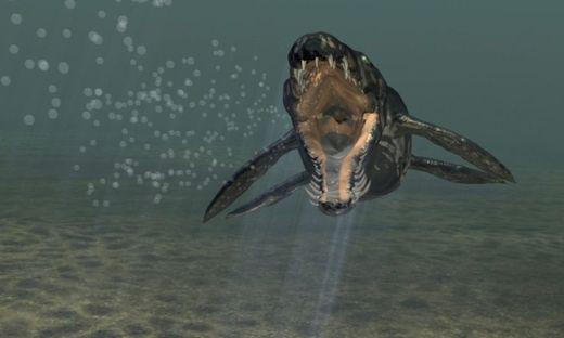 Im Bild: Eine Illustration des Pliosauriers