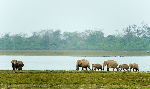In ORF 2: Brahmaputra - Der große Fluss vom Himalaya