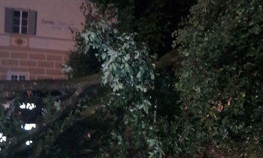 Super Nach Gewittern: 15 Meter große Eiche stürzte auf zwei Pkw &PX_32