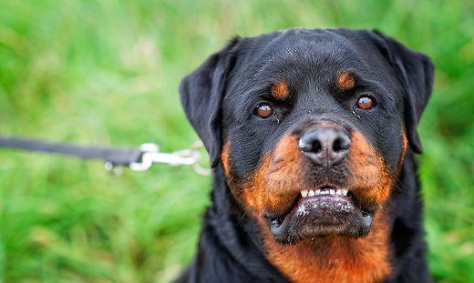 Die vermeintliche Anbieterin gab an, dass sich der Hund in Frankreich befindet (Sujetbild)