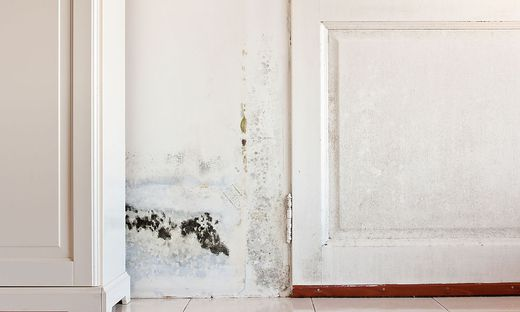 hausrat achtung der sommerschimmel lauert. Black Bedroom Furniture Sets. Home Design Ideas
